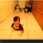 Kenji Chen y sus dos perros imitadores